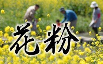 チェックシート(春、秋、花粉時期)